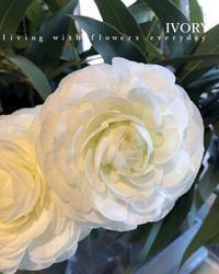『〜IVORY 花教室 1月 開催です~♬』 -  Flower and cafe 花空間 ivory (アイボリー)