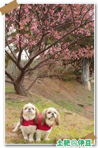 2019年1月12日土肥@伊豆 - 週末は、愛犬モモと永吉とお出かけ!Kimi's Eye