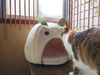 ウサギと猫の会話 - 猫背の話し