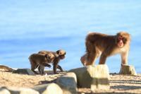 お猿色々 - 心 色