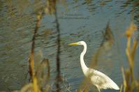 ピアノ池の鳥たち -すずめたん- - It's only photo 2