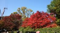 季節外れの紅葉日記2018年秋@京都・常寂光寺 - ハチドリのブラジル・サンパウロ(時々日本)日記