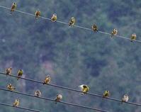 水鳥の生息数調査パート2 - おやぢの絵日記(仮)
