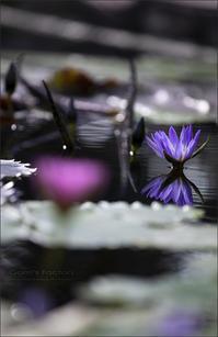 紫艶 - 我夢工房