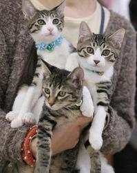 2018年の里子ちゃん近況(写真たくさん♡) - ゆきももこの猫夢日記