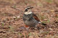 小鳥のサイズ - 世話要らずの庭