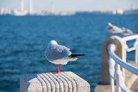 横浜 - 力技的フォトログ