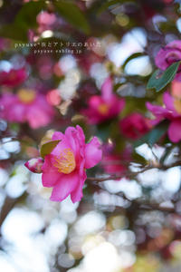Flower Photograph #15 - psyuxe*旅とアトリエのあいだ