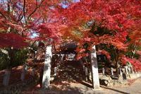 長林寺 紅葉 3 - photograph3