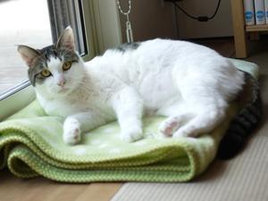猫のお留守番 くろくん編。 - ゆきねこ猫家族