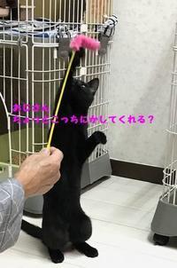 二足歩行 - 八幡地域猫を考える会