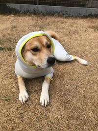 昨日、譲渡会前のシャンプーDAYでした〜😊 - 犬との穏やかな日々