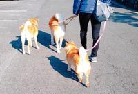 お友達と散歩 - 犬との穏やかな日々