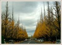 帰省日記2018*冬<紅葉とイルミネーション。>◆by アン@トルコ - BAYSWATER