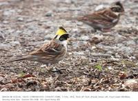 2019.1.6(2) - 鳥撮り遊び