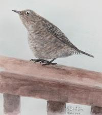 #野鳥スケッチ #ネイチャー・ジャーナル 『イソヒヨドリ』 - スケッチ感察ノート (Nature journal)