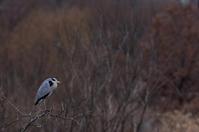 鳥も寒そうな - 立川は Ecoutezbien  えくてびあん