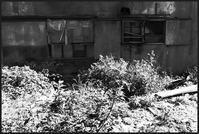 中野-20 - Camellia-shige Gallery 2