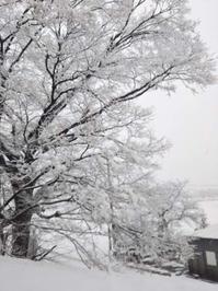 昨日とは、うって変わって、寒い一日。雪が降っています。 - 百笑通信 ブログ版