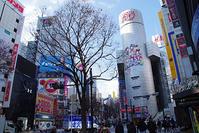 1月16日㈬の109前交差点 - でじたる渋谷NEWS