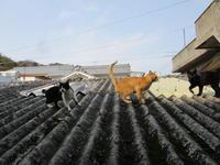 猫の通り道 - 猫背の話し