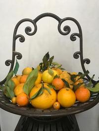 たくさんの果実と水仙の贈り物 - piecing・針仕事と庭仕事の日々