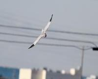 再会・ハイチュウ・2 - 季節の鳥達