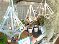 ヒンメリとエアプランツ - 手柄山温室植物園ブログ 『山の上から花だより』