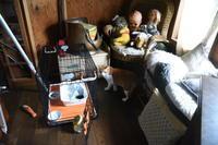 猫神様はサービス精神旺盛その42ケージにin - りきの毎日