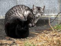 散歩コースでノシランなどいろいろ - 子猫の迷い道Ⅱ