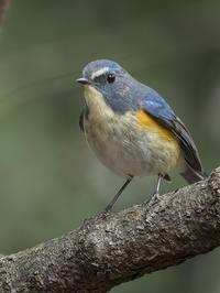 今冬、私的には小鳥少なく淋しい限り - たった一度の出会いから