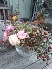 1月の薔薇の作業 - 薔薇のガーデナー Weekend's+Ladybirds