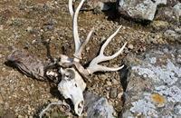 鹿の島 - ふらりぶらりの旅日記
