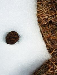 曇りで2℃の朝・・・・雪融けの形朽木小川・気象台より - 朽木小川・気象台より、高島市・針畑・くつきの季節便りを!