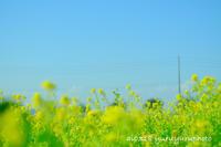 春のような。 - Yuruyuru Photograph