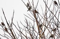 白い実の向こう側にアカゲラさん - 鳥と共に日々是好日