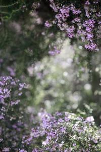 今日の新宿御苑再訪ジャノメエリカ by Canon EOS 5D MarkⅡ - みるはな写真くらぶ