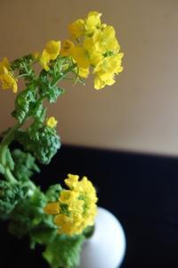 心弾む色、菜の花 - g's style day by day ー京都嵐山から、季節を楽しむ日々をお届けしますー