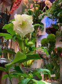 いつもの朝を迎えることの幸せ - ルーシュの花仕事