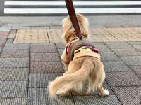 19年1月17日 穏やかなあさんぽ! - 旅行犬 さくら 桃子 あんず 日記