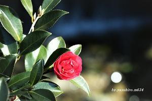 一輪の花 - 俺の心旅