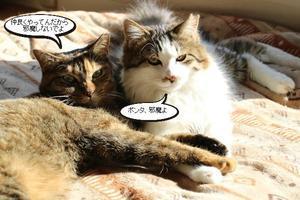 仲良しペアが2組 - 保護猫さんのご縁探し