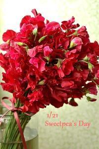 1/21はスイートピーの日。 - 花色~あなたの好きなお花屋さんになりたい~
