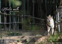 sonyの現機種で動物の瞳AFはイケちゃうのか sony α7RIII + SEL24105G 実写 - 東京女子フォトレッスンサロン『ラ・フォト自由が丘』-カメラとレンズとテーブルフォトと-
