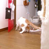 階段で遊ぶおいなりちゃん2 - ぶつぶつ独り言2(うちの猫ら2018)