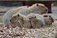 毛玉 - 動物園へ行こう