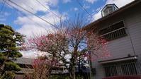 紅梅が咲いていた - はりねずみの日記帳