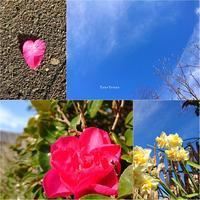1/17(木)②        がんばれ! - Evergreen. ~常磐に唐草、庭の花~