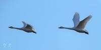 毎日同じフイ-ルドでの撮影、目的の猛禽は飛んでくれない。誠 - 皇 昇