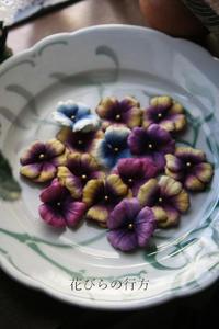 咲きだした色々パンジー と 笑えるテンテン - 布の花~花びらの行方 Ⅱ